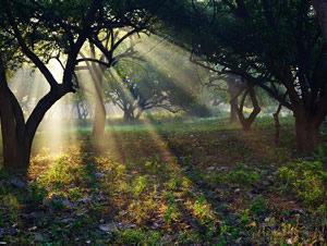Retiro Espiritual de Yoga